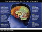Cientistas vem mapeando o cérebro de cerca de 1 000 adolescentes com técnicas avançadas de tomografia. As descobertas são surpreendentes, especialmente se considerarmos que até há alguns anos era consenso científico que o cérebro completava seu crescimento na infância e não se alterava mais. Hoje se sabe que várias estruturas cerebrais seguem evoluindo durante a adolescência, embora nem todas cresçam.  * Região Parietal: responsável pela atenção e noção de espaço. Atinge a maturidade aos 16 anos  * Região Frontal : responsável pelo autocontrole, pela capacidade de discernimento e pelo humor. Atinge a maturidade aos 20 anos.  * Sistema Límbico : responsável pelas emoções, como a raiva. Atinge a maturidade aos 20 anos.  * Região Temporal: responsável pela memória. Atinge a maturidade aos 16 anos